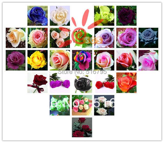 (THIS ORDER INCLUDE 300PCS,24 kinds rose seeds)- Rainbow Pink White Red Purple Green Blue Rose Seeds Bonsai flower ROSE SEEDS