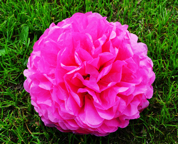 """Hot sell optional select 8"""" for 8 pcs Tissue Paper Pom Poms flowers wedding decoration in Fuchsia color-MF1201-8X8(China (Mainland))"""