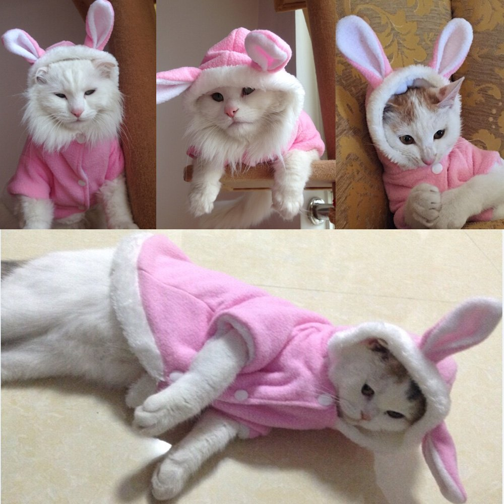 buy 2016 new cute pet cat clothes easter bunny costume