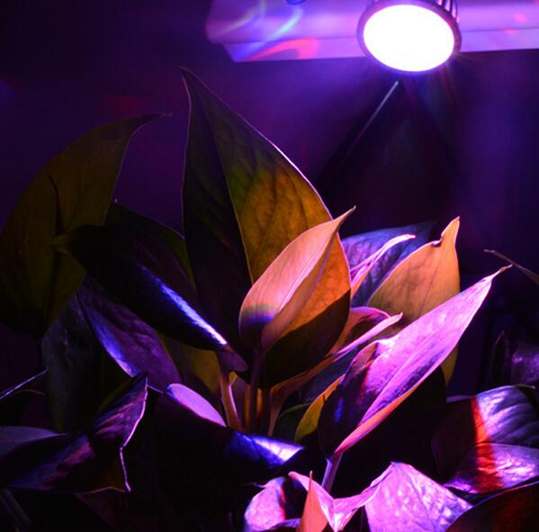 10pcs E27 6W 3x2w 2Red + 1Blue LED Grow light  hydroponics system Free Shipping<br><br>Aliexpress
