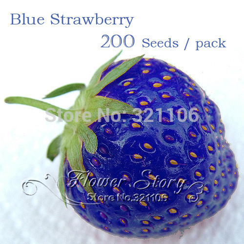 200 Blue Strawberry Seeds 100% Genuine Sweet & Juicy - rich aroma ,DIY Home Garden fruit plant seeds(China (Mainland))