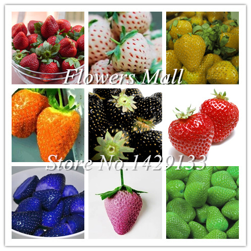 Delicious Multi-color Strawberry seeds 400PCS Black Blue White Strawberry Fruit Seeds Potted Plants Home Garden True Variety(China (Mainland))