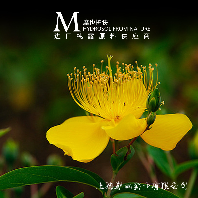 2015 Real Time-limited Unisex Mens Aftershave The Import Of French Organic St. John's Wort 500g Moisturizing Lotion(China (Mainland))