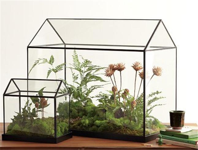 Plant Terrarium 9.jpg