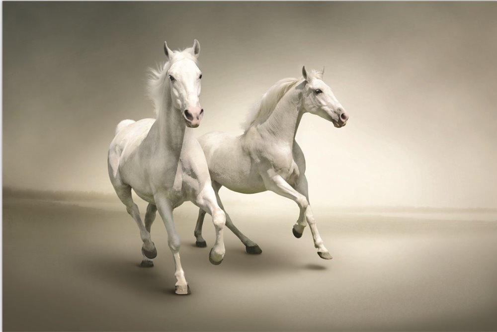 item  Piece Free Shipping Hot Sell Modern horse Wall Painting Home decoration Art Picture Paint on