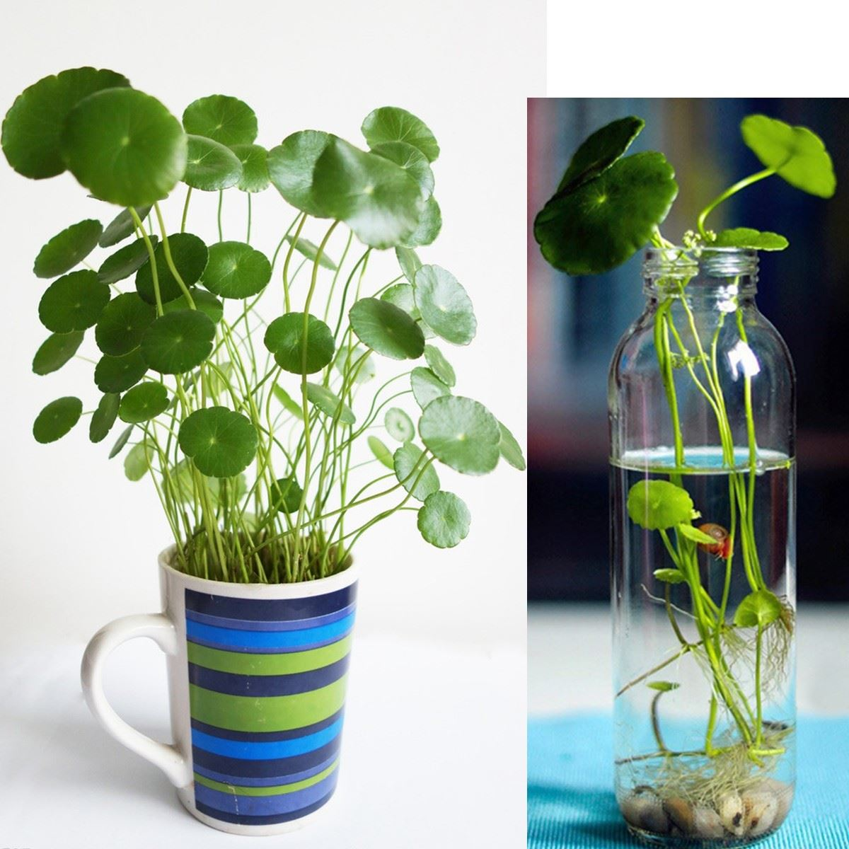 High Quality Indoor Water Garden Promotion Shop for High Quality