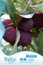 Buy Yang-Mei seeds Strawberry tree seed, raspberry potted garden planting fruit trees Yumberry, 5 grains/bag waxberry plant seeds for $1.99 in AliExpress store