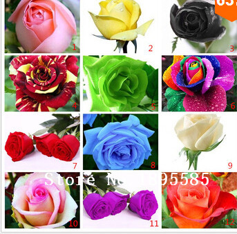 Flower pots planters ,12 Kinds Of 100 Seeds, Rainbow rose seeds Beautiful rose seed Bonsai plants Seeds for home & garden(China (Mainland))