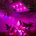 DE US CA Stock High Power 1200w COB Full Spectrum Led Grow Light With 90 degree