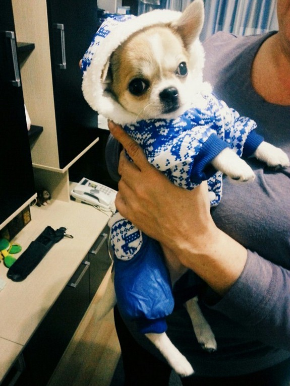 Design Dog Clothes Winter Warm Pet Jumper Hoodie Fashion Cotton-padded Clothing Coat Promotion,Size(S-XXL) - Trendy store