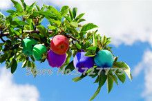 Free Shiping Bonsai Fuji Apple Tree Seeds, (60 pieces Fresh Apple seeds), PLUS MYSTERIOUS seeds 100pcs/lot RS28(China (Mainland))