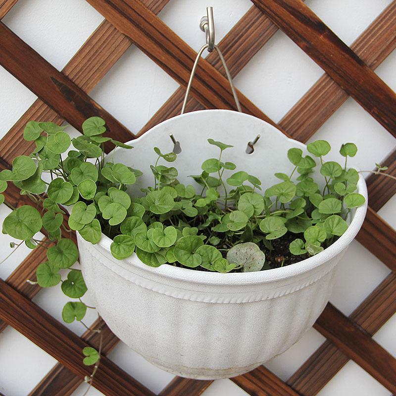 Plante Panier Suspendu : Suspendus plante en pot promotion achetez des