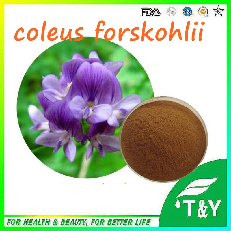 coleus forskohlii extract 100% pure natural forskolin powder