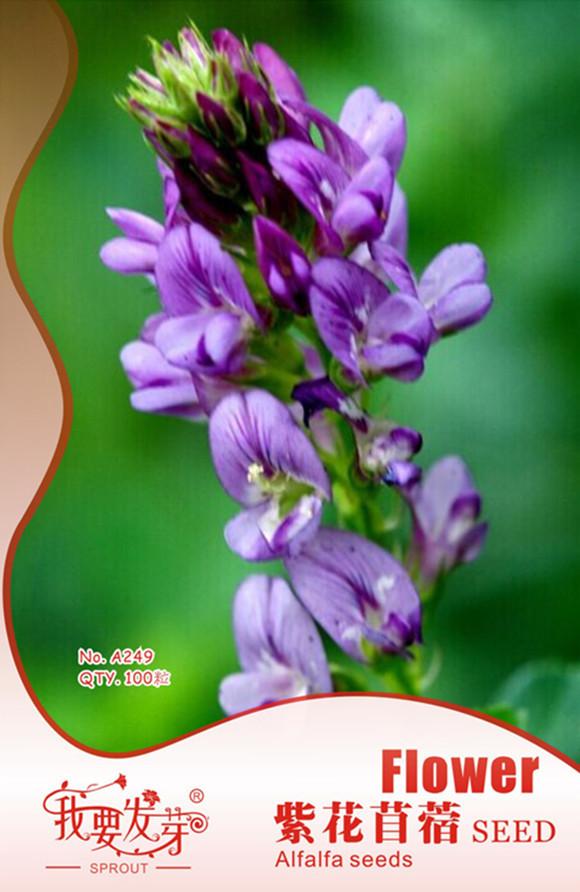 Цветы люцерны