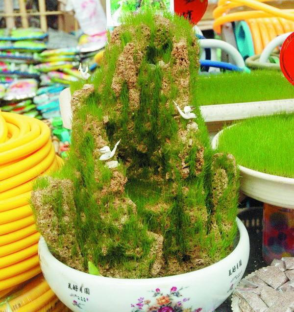 Free Shipping 100 Bonsai Grass seeds ,Very Strong Vitality Short Grass Seed F011(China (Mainland))