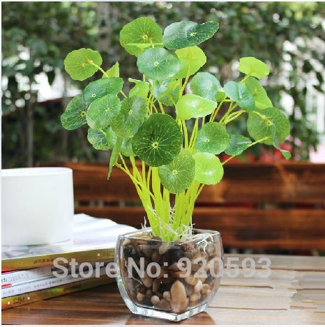 Buy hitom leaf lotus leaf green plants for Angela florist decoration