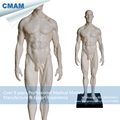CMAM PRC47 White PU Quality 1 6 Male 30cm Sculpture Medical Skull Head Artist Model