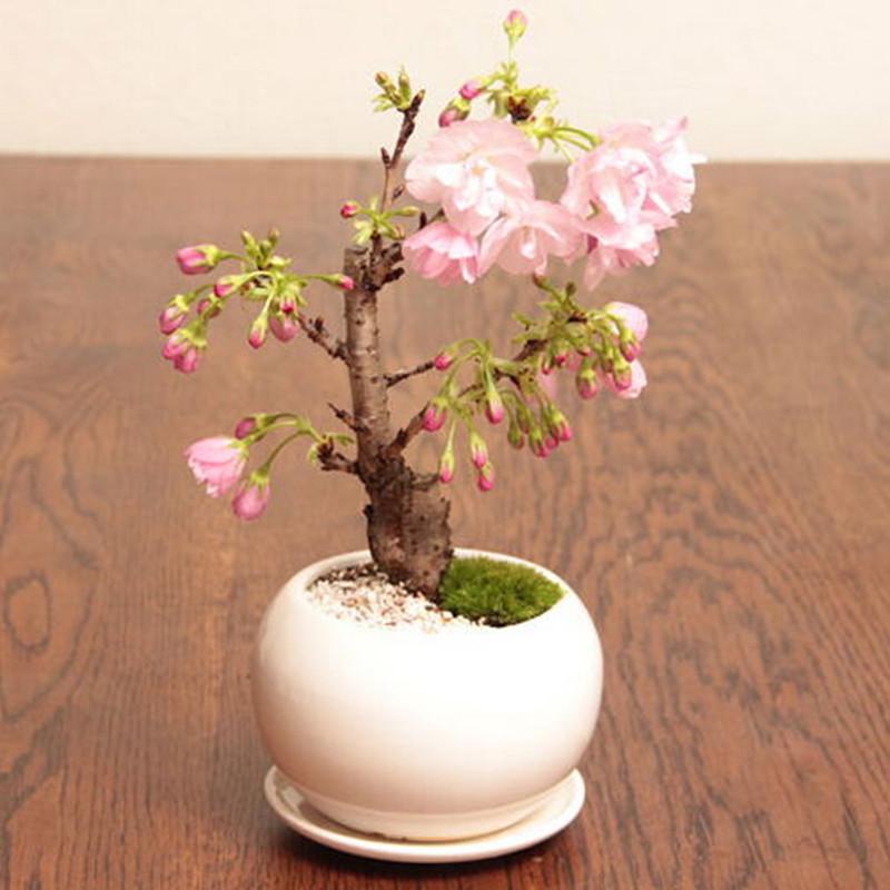 Sakura garden perinton coupons
