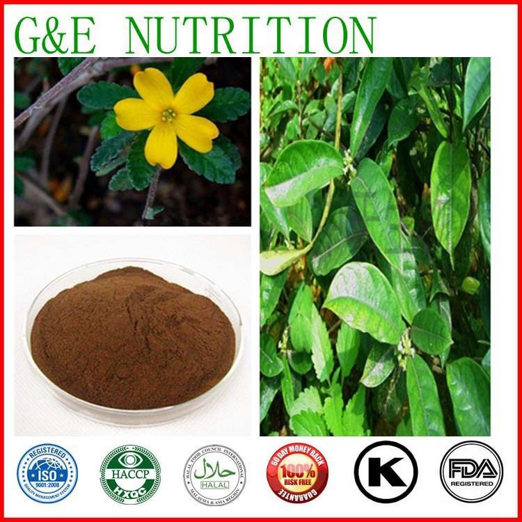 GMP Natural High Quality Damiana leaf Extract/Damiana leaf Extract Powder