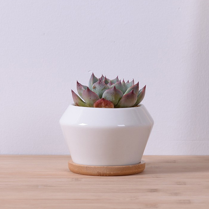 Garden Supplies White Glazed Ceramic Decorative Flower Pots With Bamboo Tray Desktop Planter Pots Small For Succulent(China (Mainland))