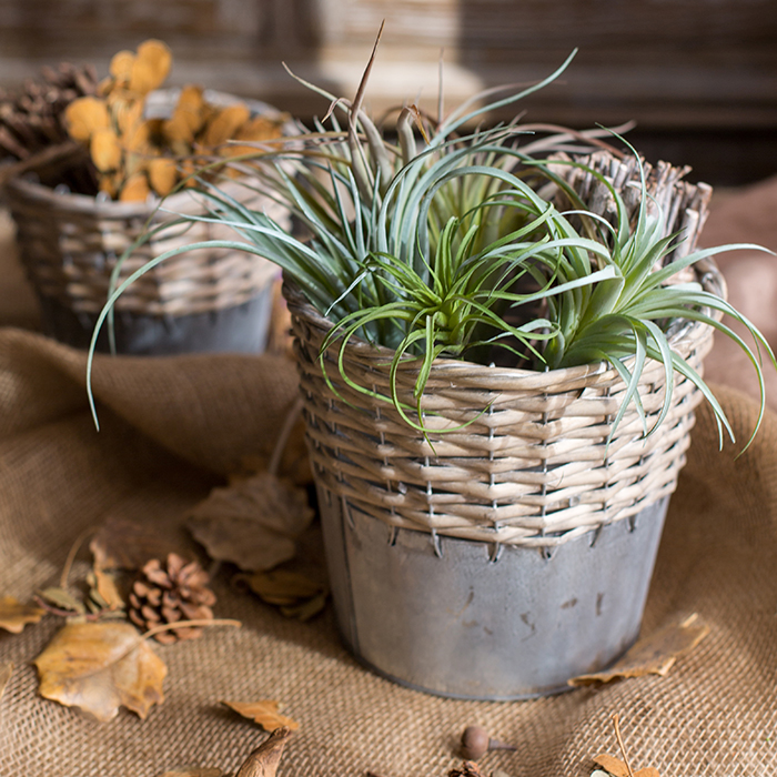 [skim] garden accessories Home Furnishing Han willow desktop storage tin Casamento flower pot plant.(China (Mainland))