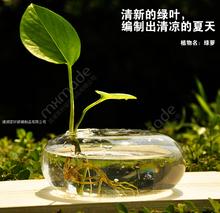 Round Terrarium Cute Glass Pots Flower Pot 15*5 cm Vases Tabletop Wedding Decoration Blow Pots Round Terrarium (China (Mainland))