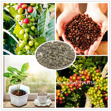 A Pack 30 Pcs Coffee Bean Seeds Balcony Bonsai Tree Plant Seed Coffee Cherry Seeds(China (Mainland))