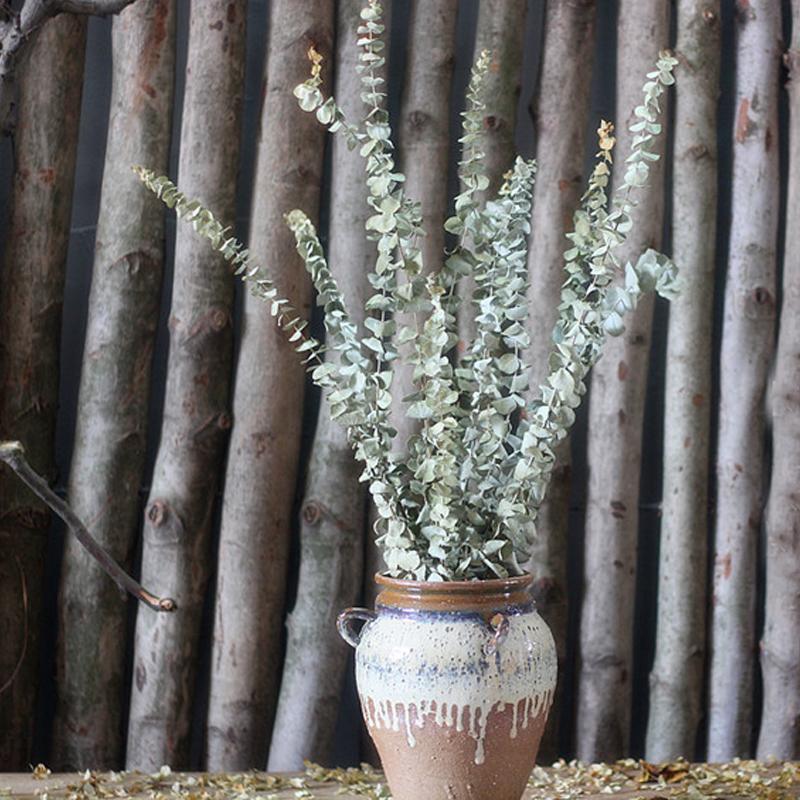 Achetez en gros eucalyptus s ch e branches en ligne des - Branche d eucalyptus ...
