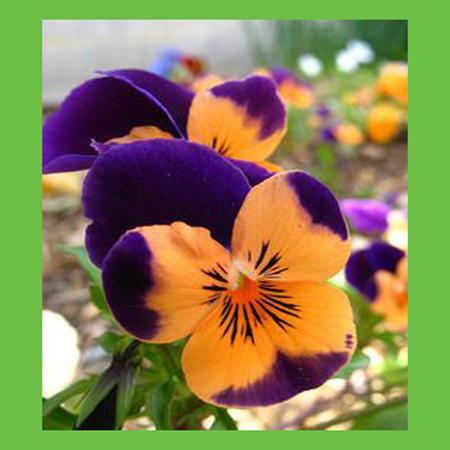 Online get cheap purple color combinations for Terrace color combination