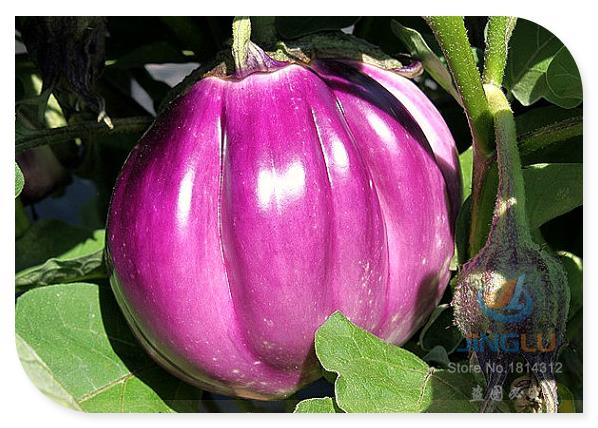 Eggplant , 50 seeds, Italian heirloom, ruffled magenta fruit, mild creamy flavor, perfect for stuffing, loves summer heat(China (Mainland))