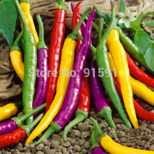 120pcs Vegetables Paprika seeds Organic Cayenne Pepper Blend Seeds NON GMO(China (Mainland))