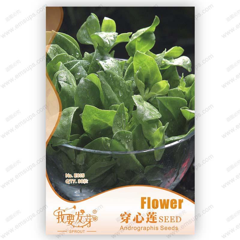 Original packaging andrographis seeds edible andrographis paniculata medicinal plants balcony vegetable flower seeds - 30 pcs(China (Mainland))