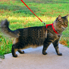 1PC Top Quality Adjustable Pet Cat Kitten Nylon Lead Leash Halter Collar Harness Clasp Belts ,3 Colors, Wholesale Free Shipping(China (Mainland))