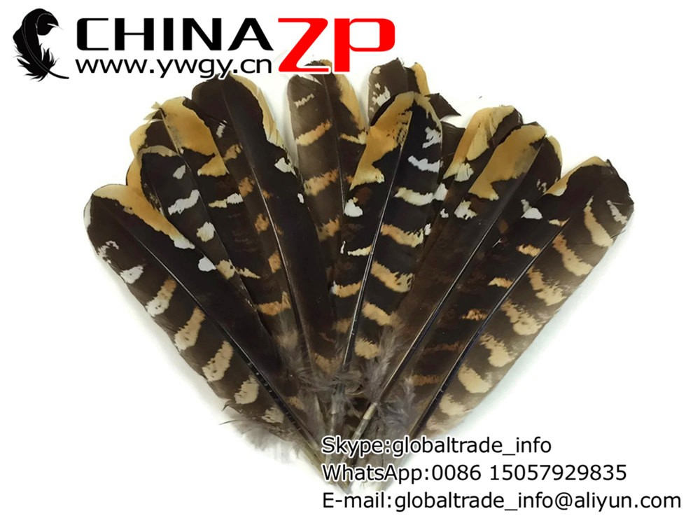 Pheasant Feathers, 5 Pieces - 6-8 NATURAL Reeves Venery Pheasant Wing Feathers 3
