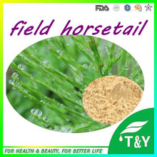 High-grade and Popular field horsetail extract unwanted hair removal(China (Mainland))