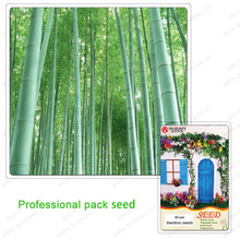 Concept Stems of Plants BLACK BAMBOO SEEDS Bamboo Seed Purple a Professional Pack 60 pieces / lot(China (Mainland))