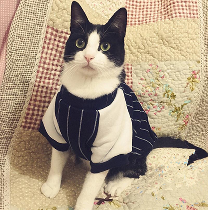 Зимняя кошка пальто одежда бейсбол Толстовки