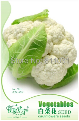 60pcs/bag white Broccoli cauliflower high nutritional value seeds organic vegetable bonsai plant Original Packing free shipping(China (Mainland))