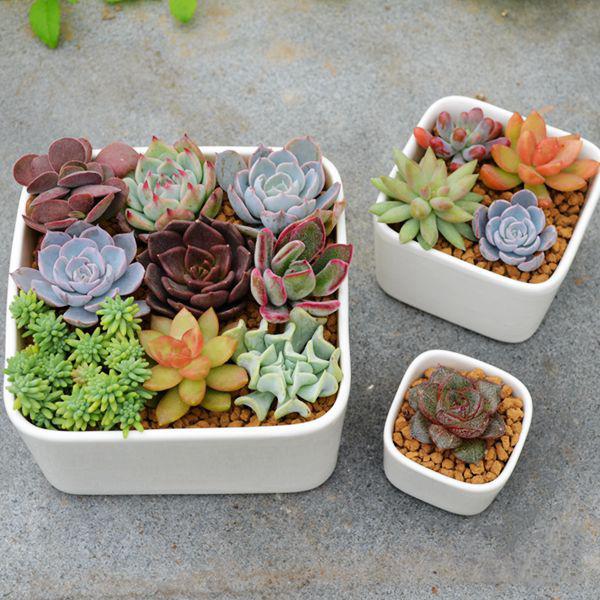 mini micro garden ornament white small bonsai pots planter elegant kasokudo bonsai planter inspired by the automotive