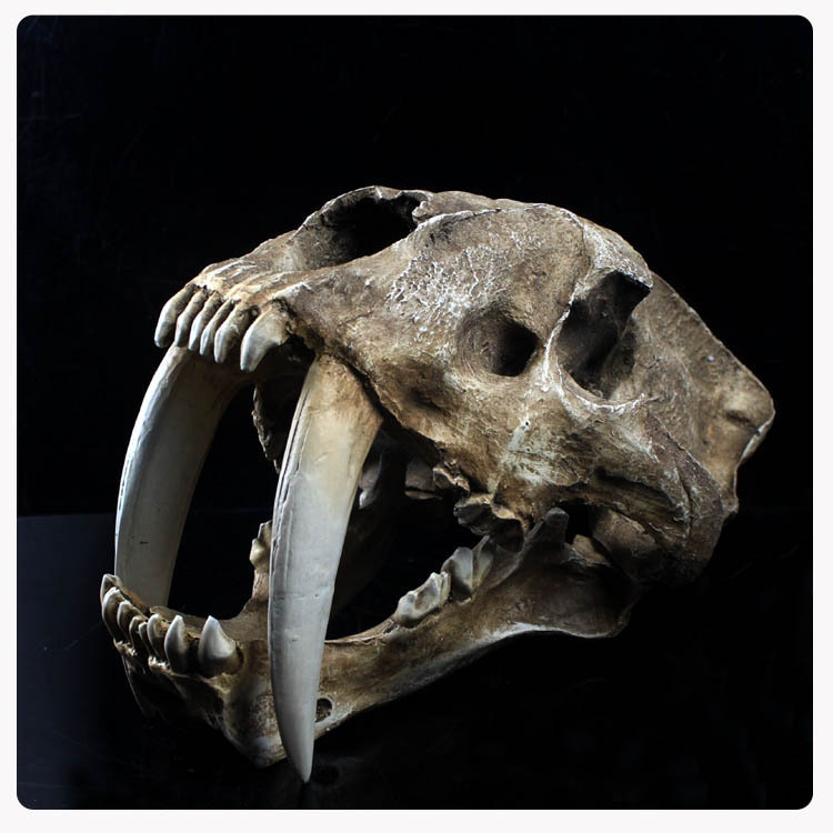 High Artificial Saber-toothed Tiger Model Resin mask The skull model 35*25*20cm 2400g Free shipping via EMS DHL(China (Mainland))
