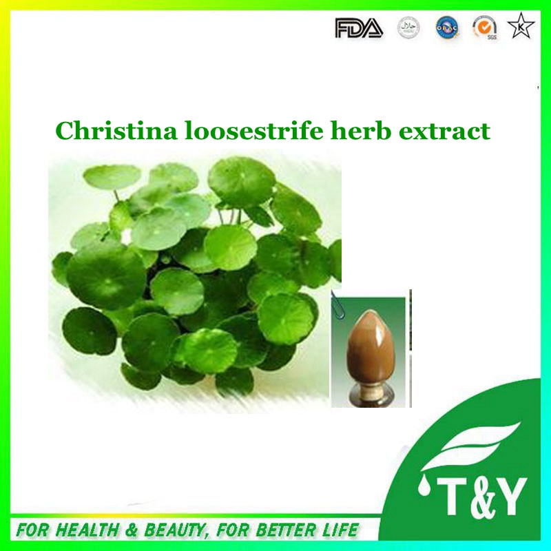 100% natural Top quality Lysimachia christinae Hance. P.E/Christina Loosestrife Herb extract 10:1 700g/lot