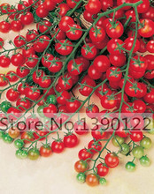 100 - Greek tomatoes seeds heirloom sweet gardening seeds plants non gmo vegetable seeds for home garden planting(China (Mainland))
