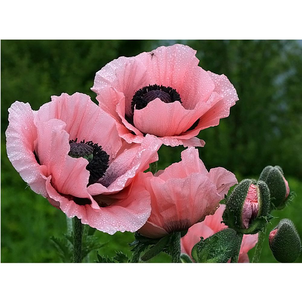 Acquista all 39 ingrosso online schemi a punto croce dipinti - Modello di base del fiore ...