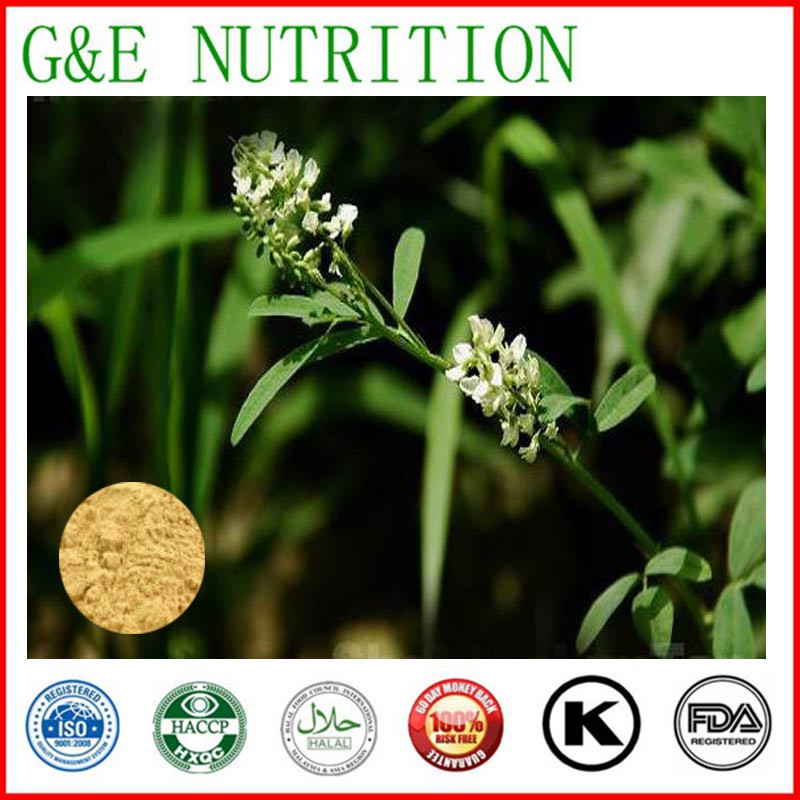 Factory supply high quality Spreading Hedyotis Herb Extracts  powder    10:1   700g