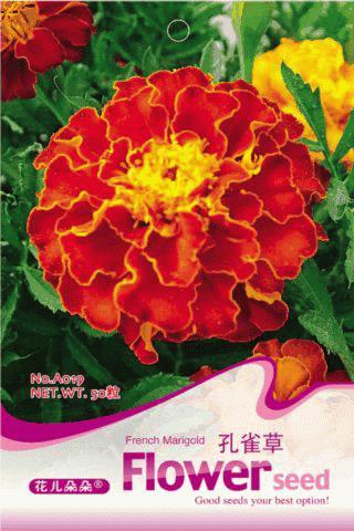 Flower French marigold Seeds, Original Package 60pcs Garden bonsai Flower seeds, Easy Grow tagetes patula(China (Mainland))