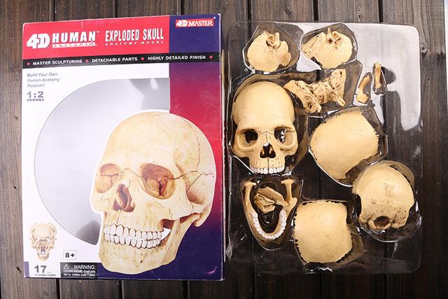 Cheap anatomy models