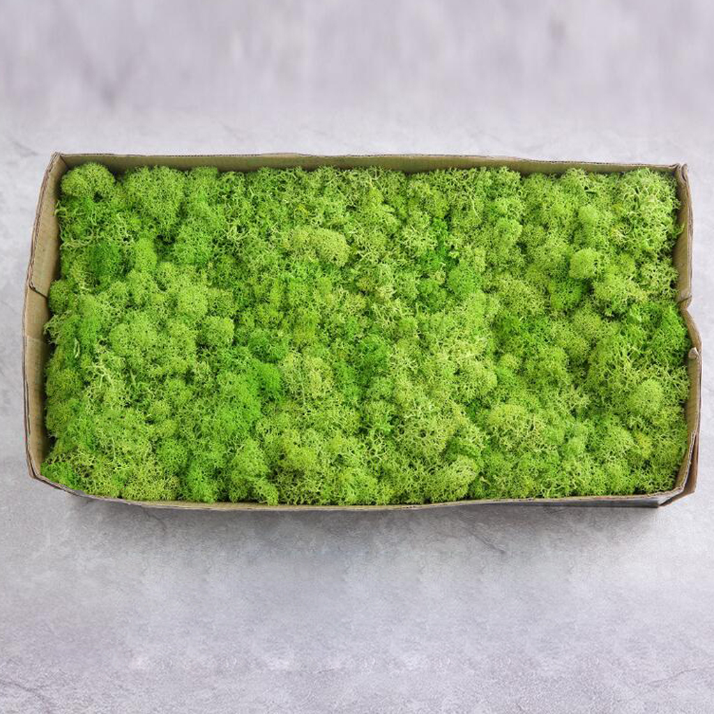 Colorful Artificial Moss Plant DIY Dried Reindeer Moss Floral Crafts Flowers for Plant Pot Garden Home Wedding Decor