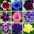To get coupon of Aliexpress seller $3 from $9 - shop: Flowers Story in the category Home & Garden