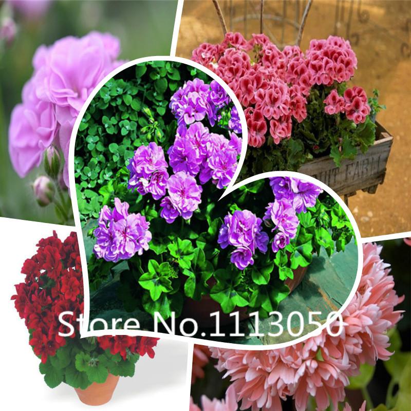 Семена цветов почтой с бесплатной