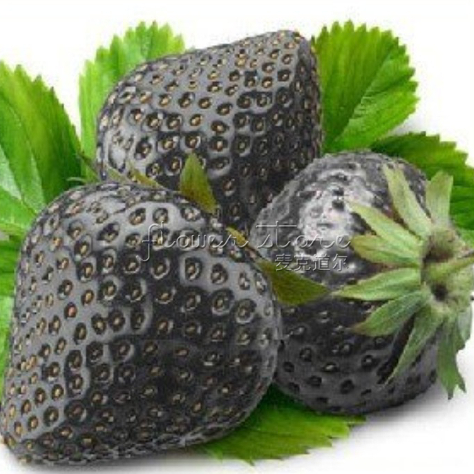 Free Shipping 100 Healthy Black Strawberry Seeds ruit Fresh Exotic Seeds Good Taste Fruits Easy Care(China (Mainland))